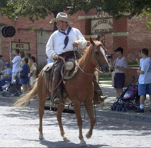 Drover on horseback