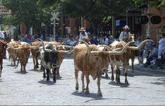 Longhorns on Exchange Street