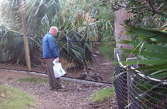 Bob talking to the birds