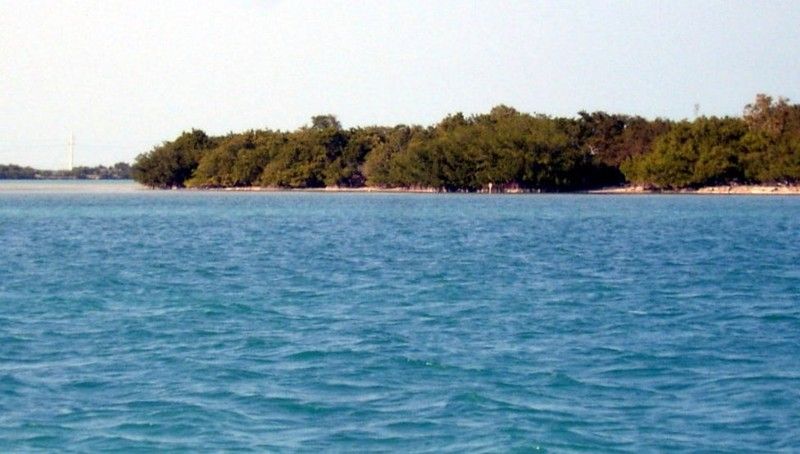 Mangroves on Indian Key
