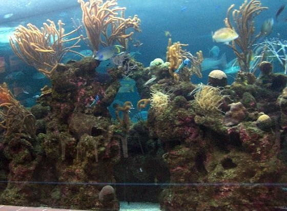 Reef Tank in the Aquarium