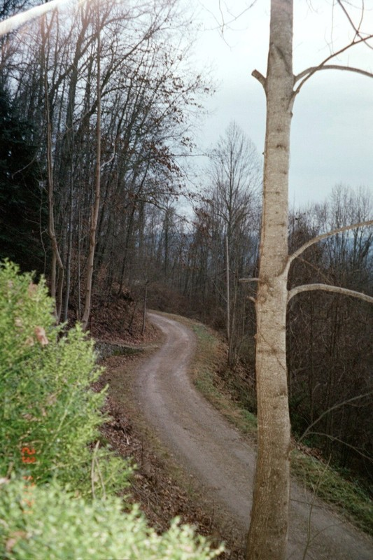 Road to the cabin