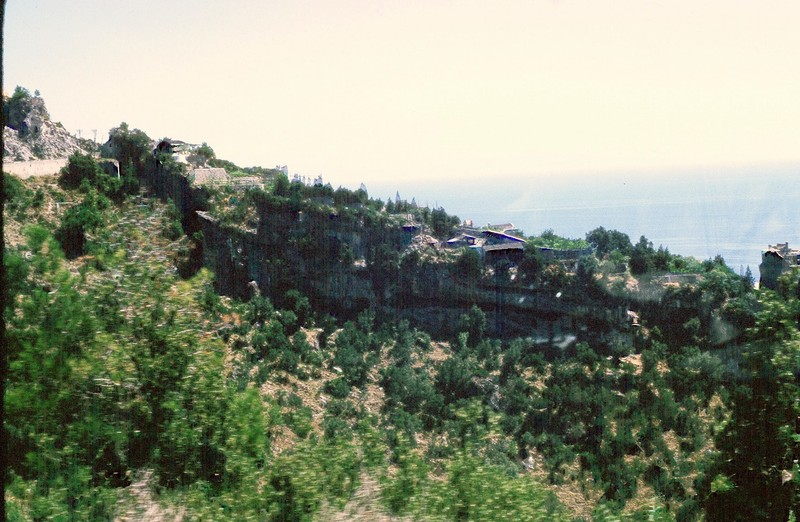 Olive terraces