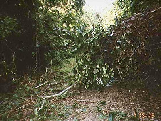 Wilting vegetation