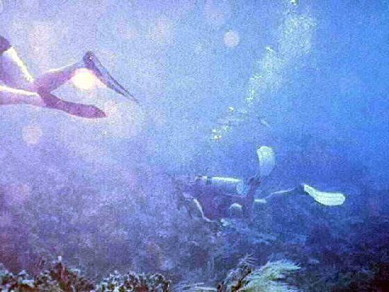 Fellow Divers