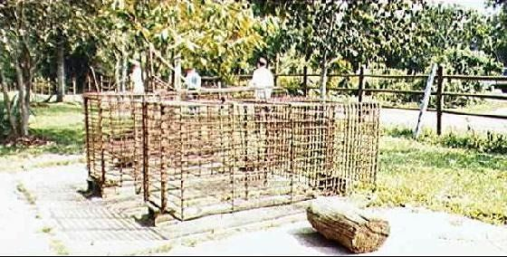 Old Jaguar cages.  In the old days when jaguars were trapped or caged, they used such as these. Even then, jaguars are capable of escaping