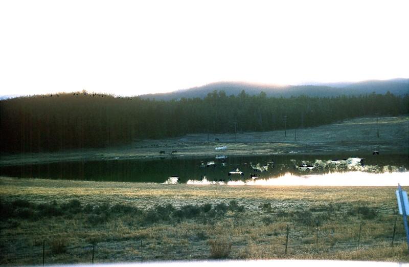 Ponies by lake