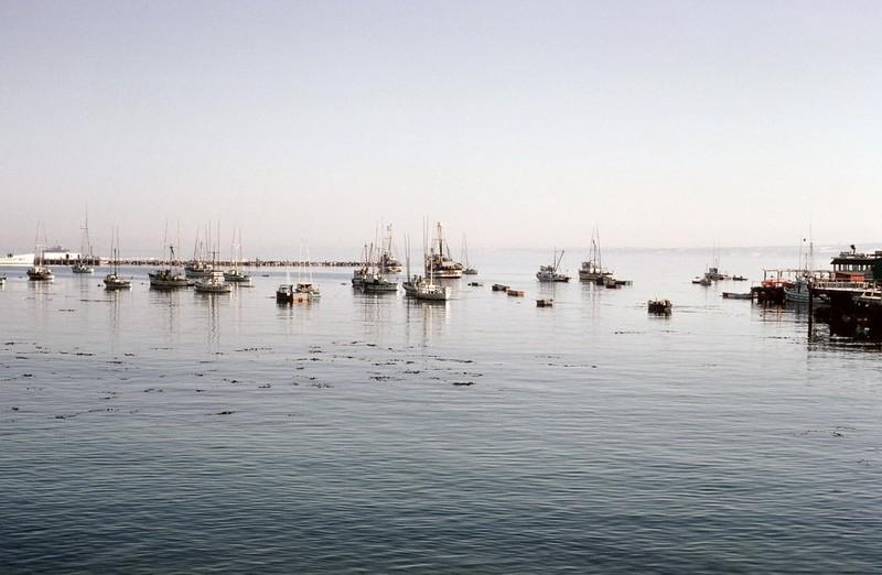 Marina in Monterey