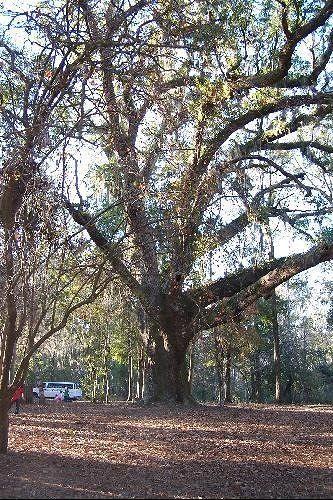 Historic Blakely Park
