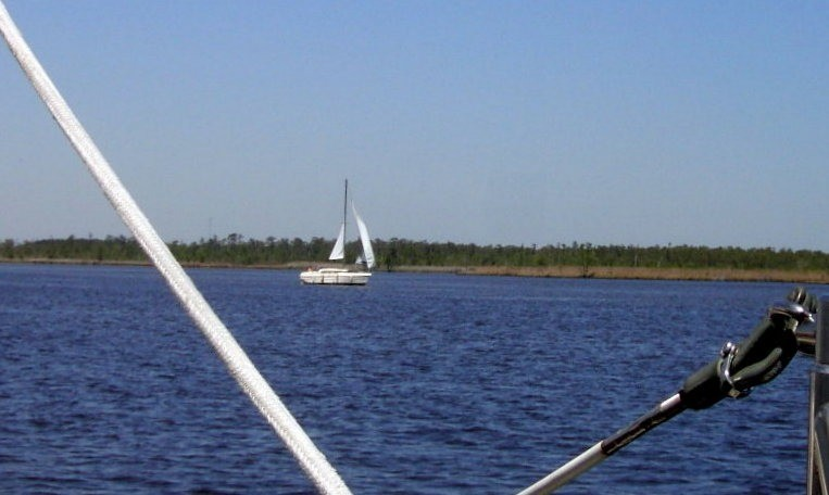 Sailing down the Alligator