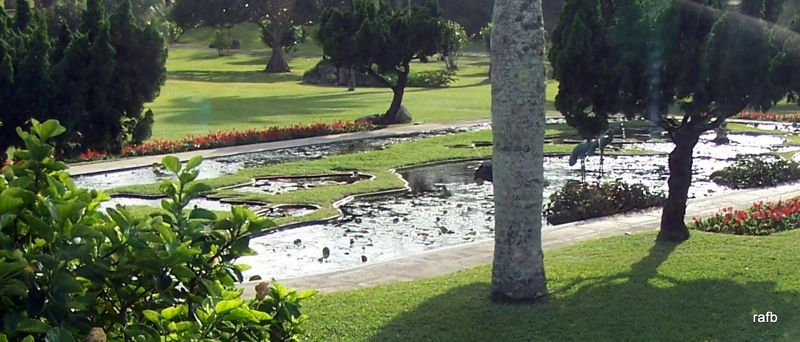 Waterlily pond with map of Bermuda