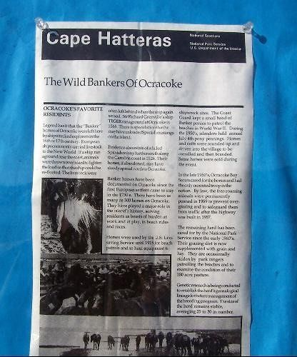 Information sheet on Ocracoke's Favorite Residents