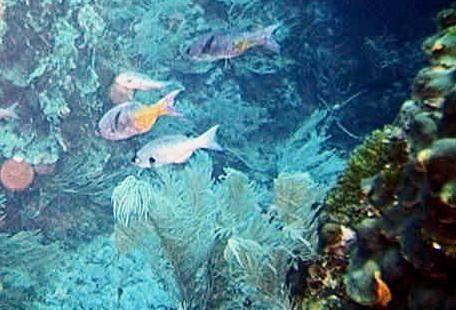 large_3637409-Biggest_Reef_Belize.jpg