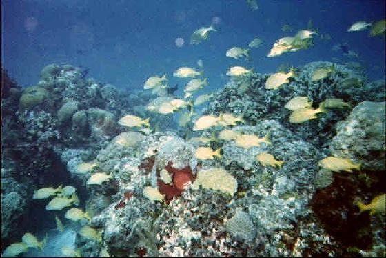 large_3637410-Biggest_Reef_Belize.jpg