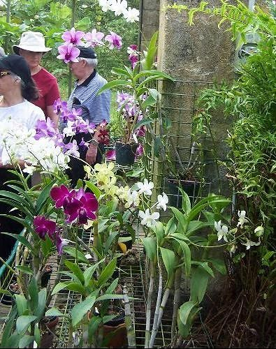 Orchid house - Barbados