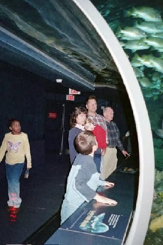 Watching the fish in the Shark Tunnel from the people mover
