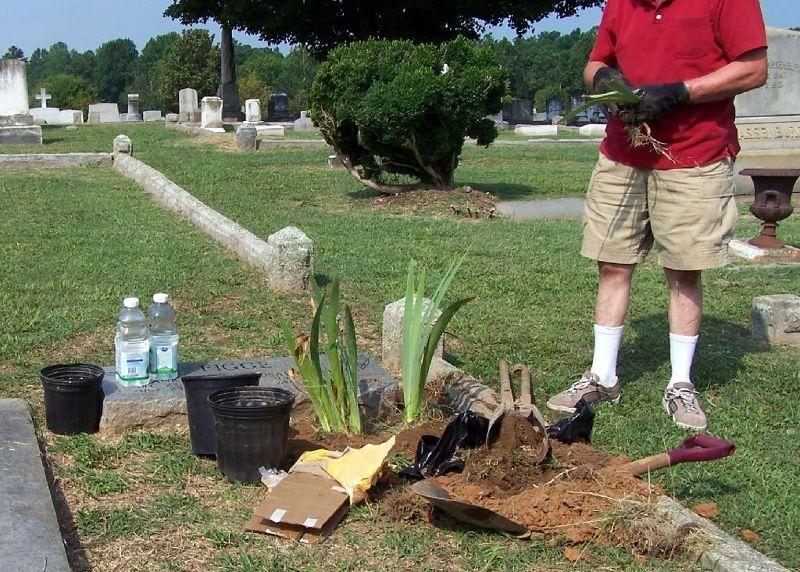 Bob planting iris