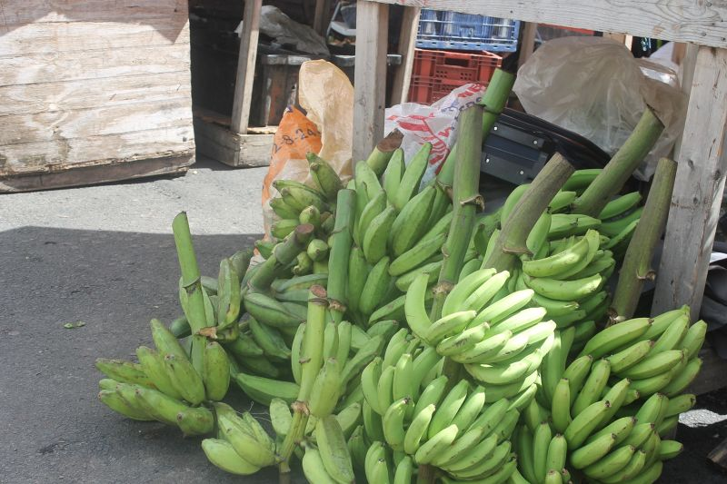 I think these are plantains and not bananas - Saint George's