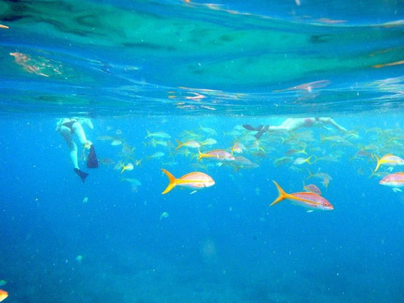 Snorkelers and fish