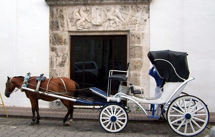 Horse and cart outside