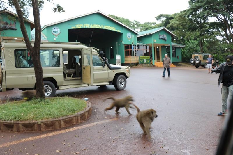 Baboon Bandits running away
