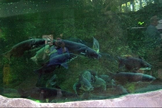 Accidental reflection of me in the tank side