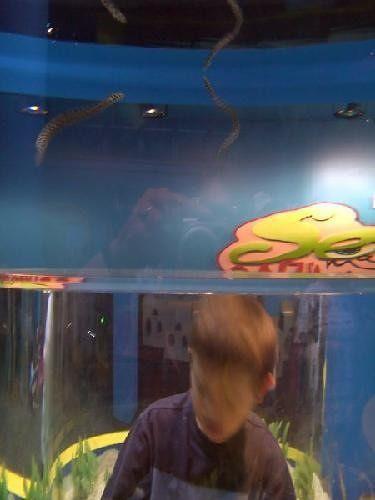 Aquarium - part III - Children's Discovery Section
