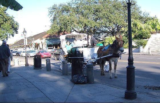 Mule drawn carriage near Jackson Square