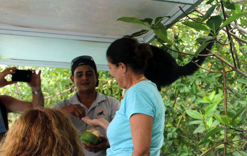Guide feeding a monkey coconut