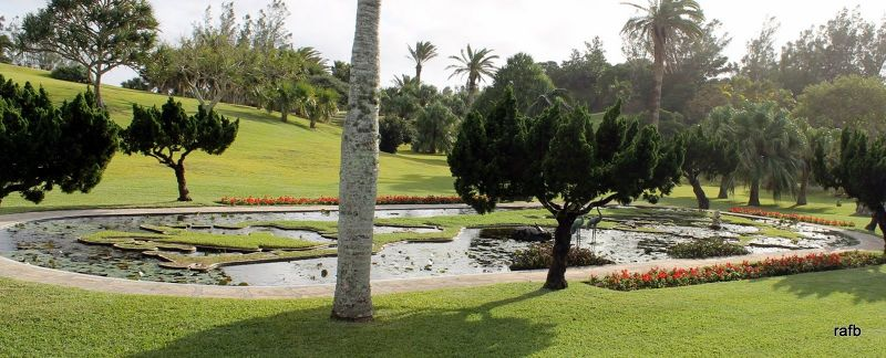 Lily pond with the islands of Bermuda