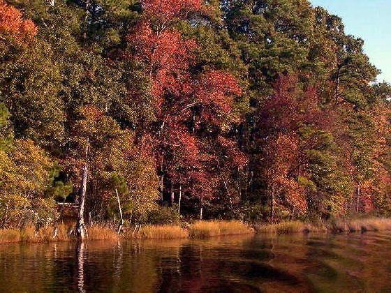 650222-Deep_Creek_Norfolk.jpg