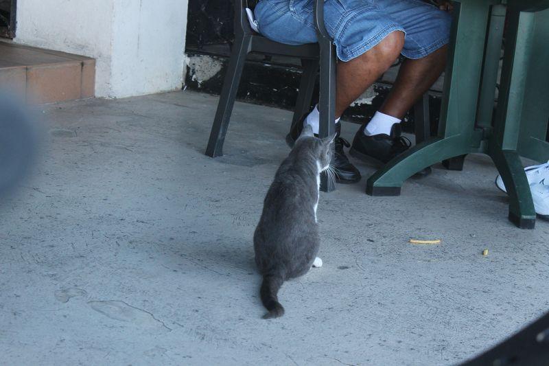 Resident Tom cat (not interested in fries)
