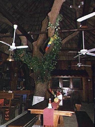 Frangipani tree inside