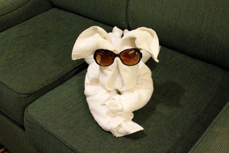 Dog wearing Bob's sunglasses - Bermuda