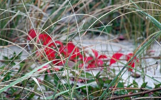 Red flowers in the grass