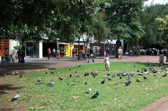 Pigeons in front of Columbus