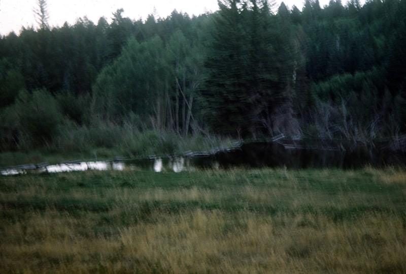 Beaver swimming in Willard Walker's pond