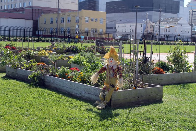 Garden with scarecrow