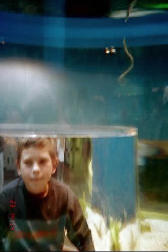 Sea snakes in tank
