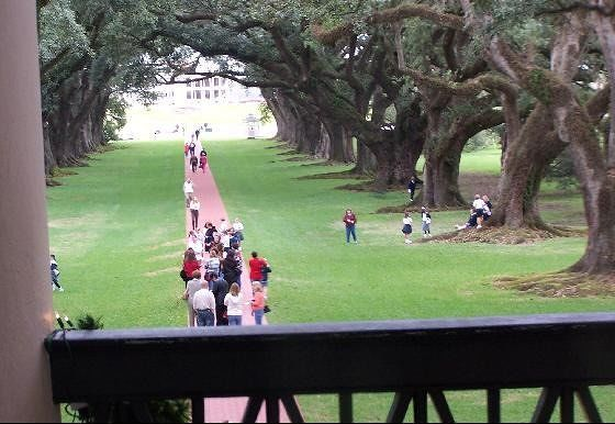Visitors on the Avenue of Oaks from the 2nd floor