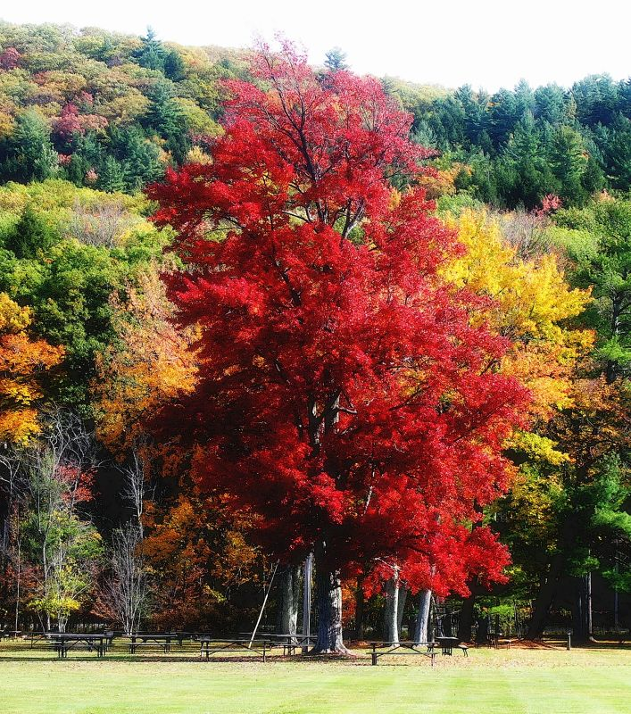 Trees in the fall - Vermont