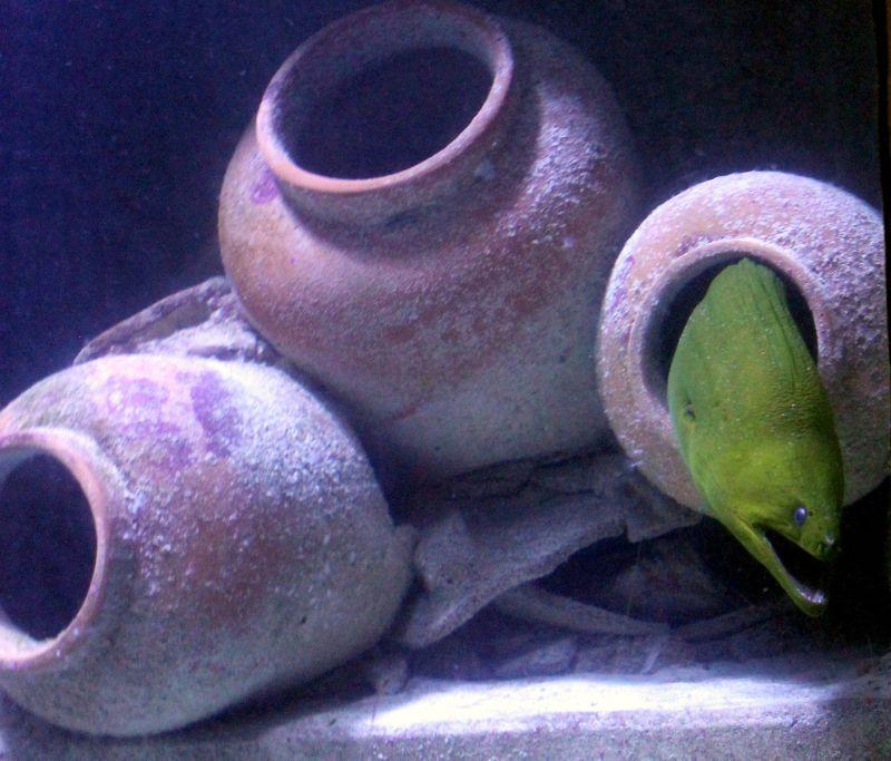 Moray eel tank