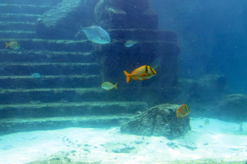 Fish in front of steps