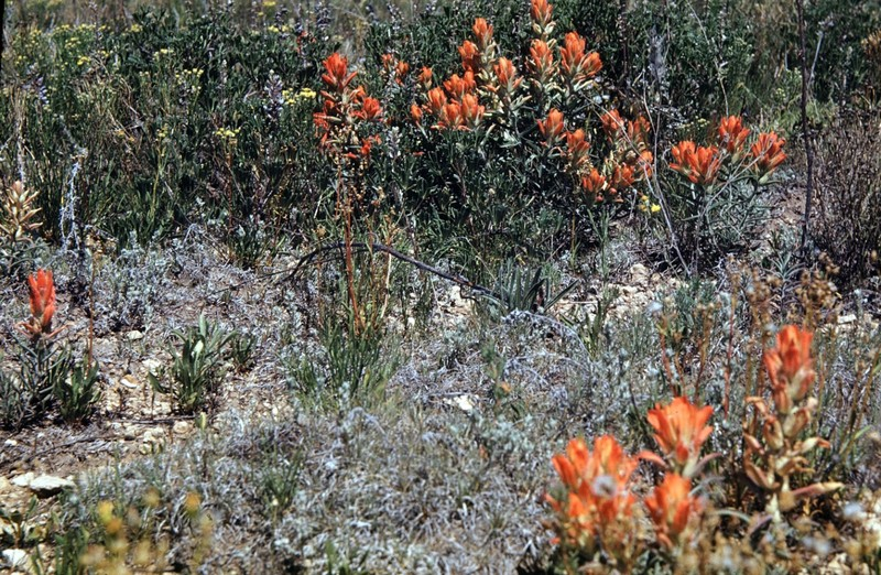 Flowers on prairie near Figge's