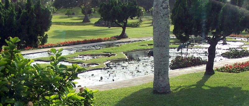 Waterlily pond with map of Bermuda at Waterville