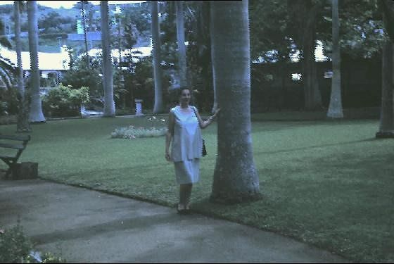 Somer's Garden Royal palms - best on island and pregnant me in 1963
