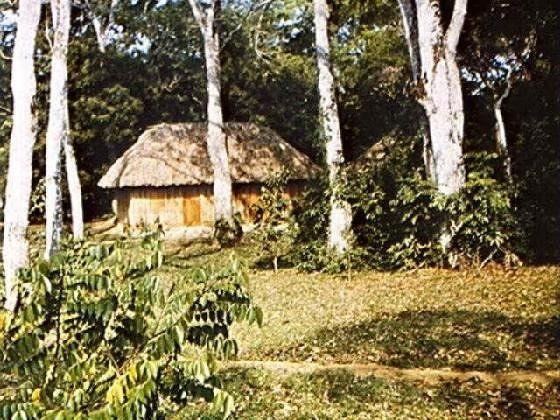 Mahogany thatched cabins