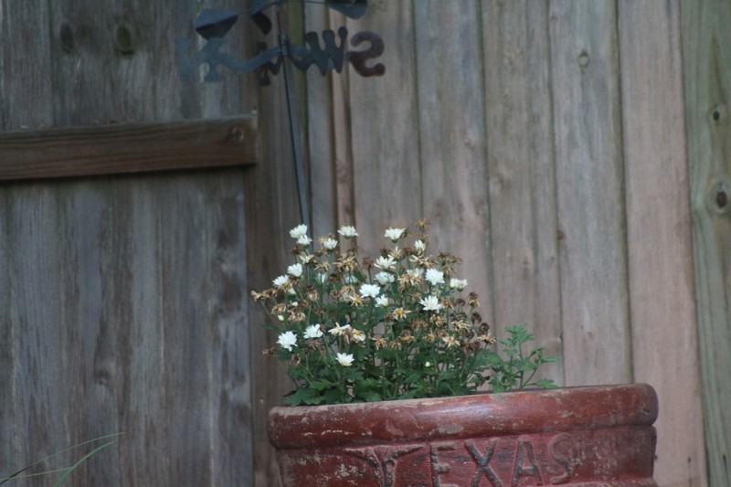 Flower pot at our daughter's pool