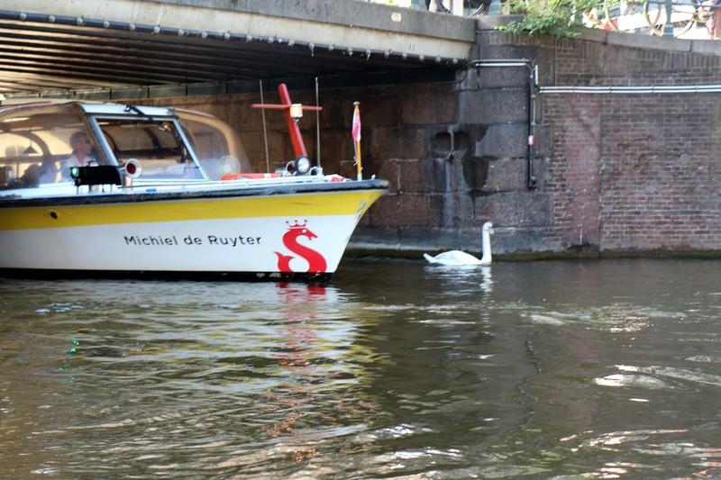 Swan escort