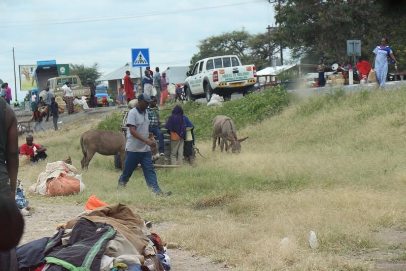 Donkeys at Sunday market